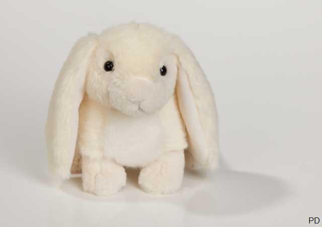 teddy löwen kaninchen
